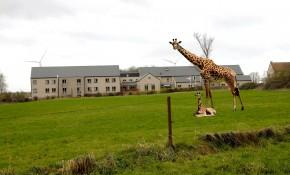 girafe_perwez